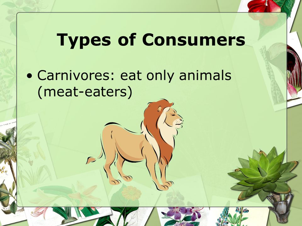 Types of Consumers Herbivores: consumers that eat only plants