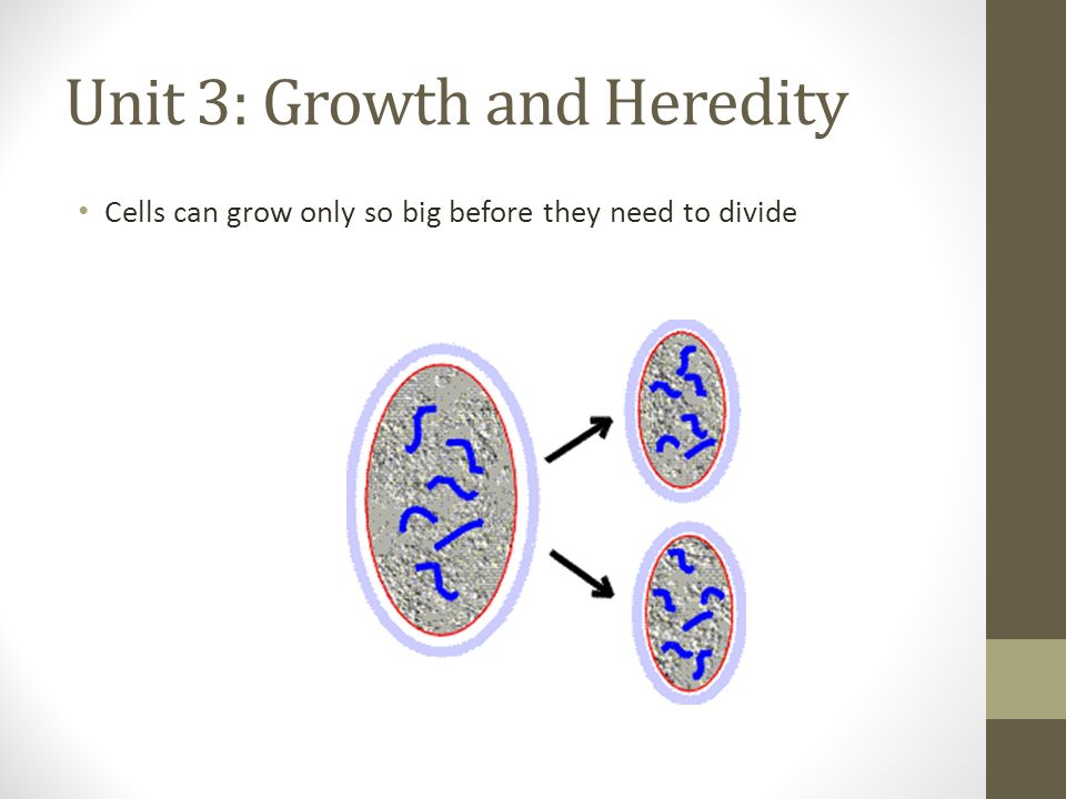 Unit 3: Growth and Heredity Cells can grow only so big before they need to divide