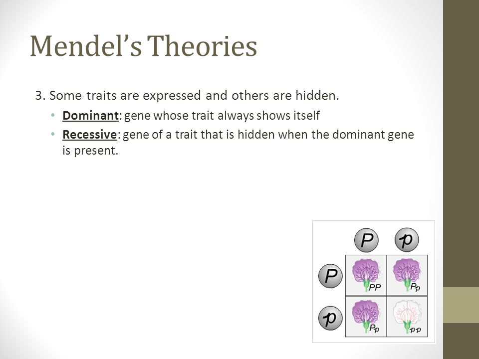 Mendels Theories 3.Some traits are expressed and others are hidden.