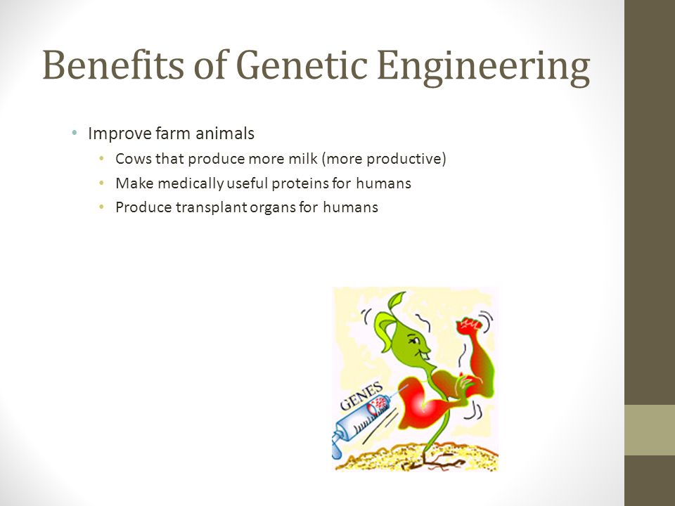 Benefits of Genetic Engineering Improve farm animals Cows that produce more milk (more productive) Make medically useful proteins for humans Produce transplant organs for humans