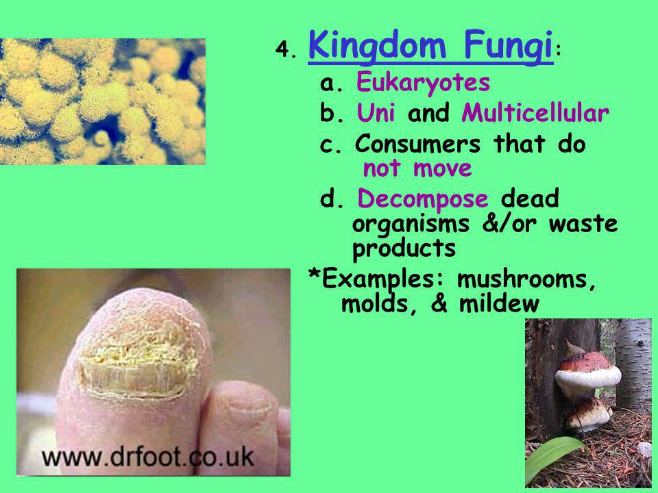 4. Kingdom Fungi : a. Eukaryotes b. Uni and Multicellular c. Consumers that do not move d. Decompose dead organisms &/or waste products *Examples: mus