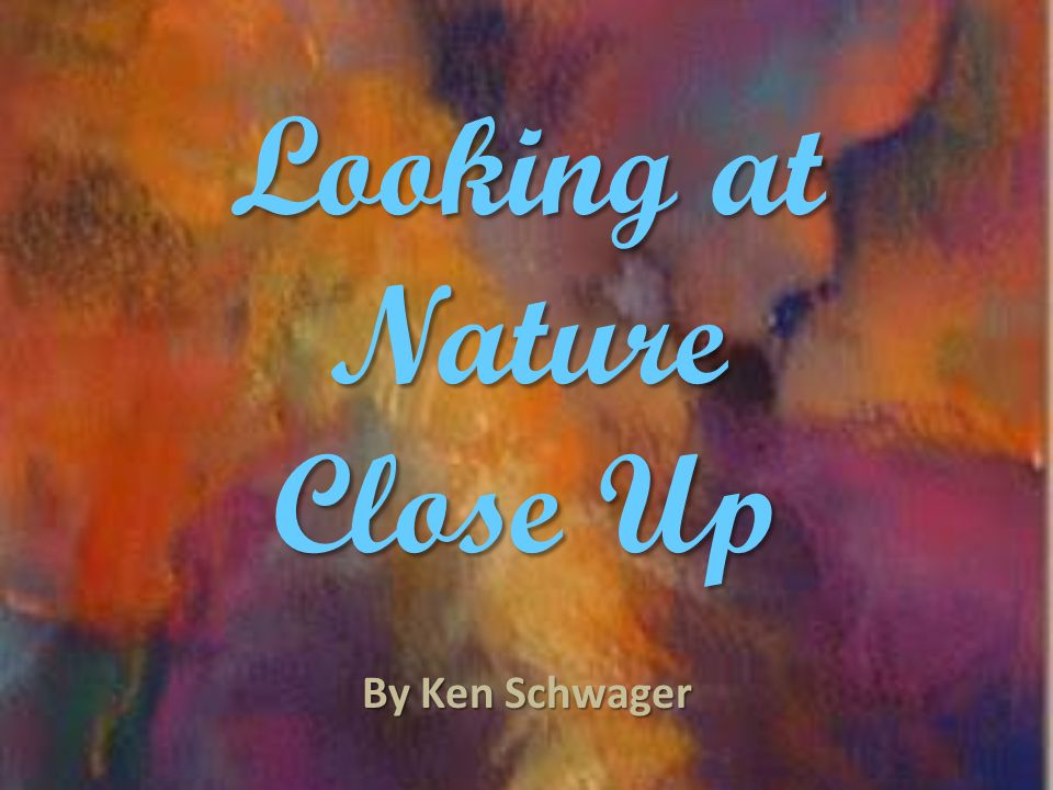 Looking at Nature Close Up By Ken Schwager
