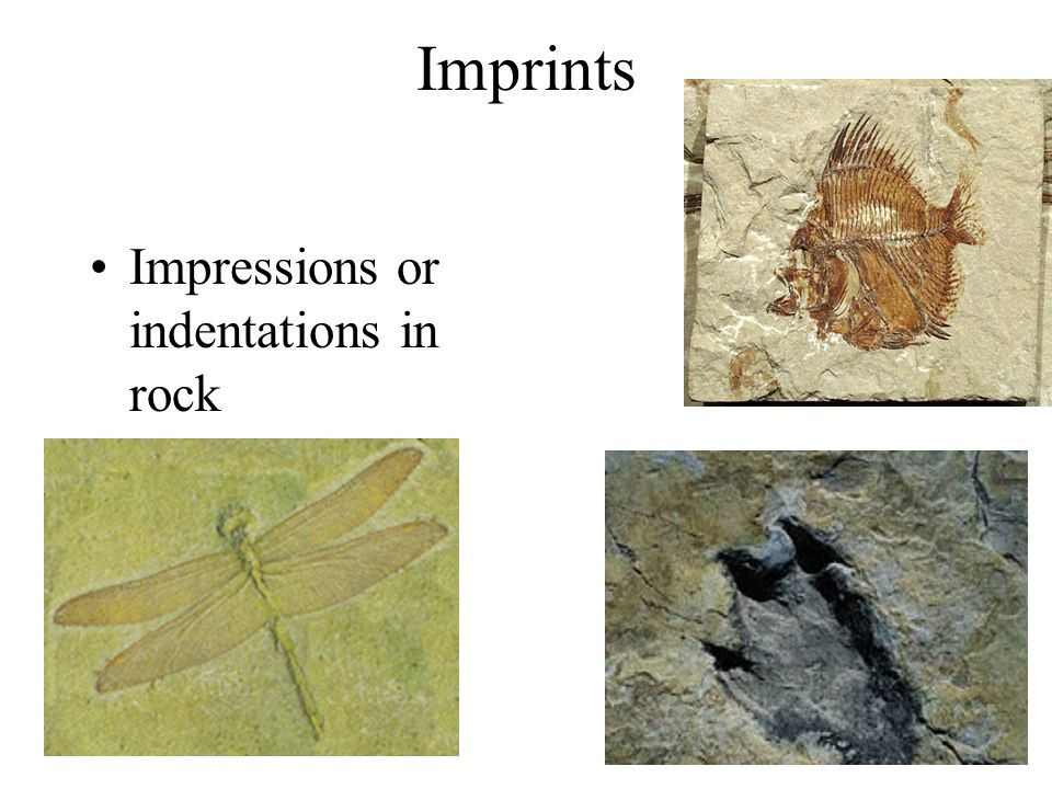 Imprints Impressions or indentations in rock