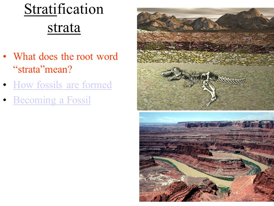 Stratification strata What does the root word stratamean How fossils are formed Becoming a Fossil