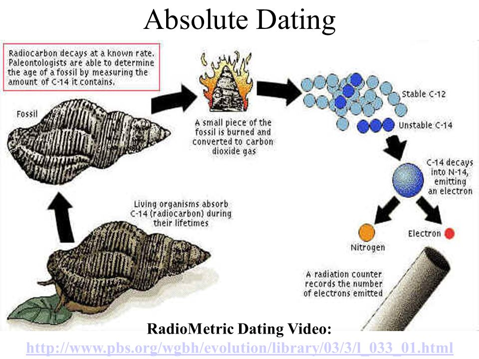 Absolute Dating RadioMetric Dating Video: http://www.pbs.org/wgbh/evolution/library/03/3/l_033_01.html http://www.pbs.org/wgbh/evolution/library/03/3/l_033_01.html