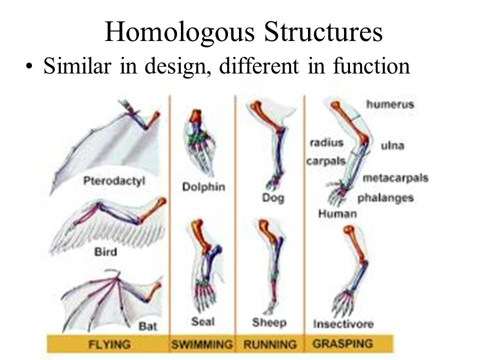 Homologous Structures Similar in design, different in function