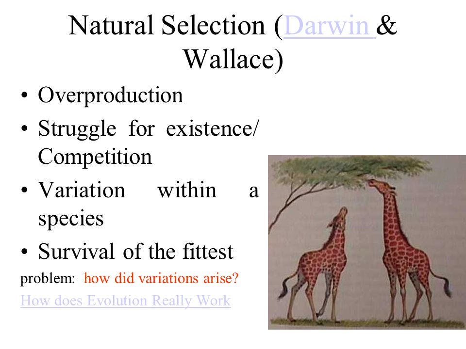 Natural Selection (Darwin & Wallace)Darwin Overproduction Struggle for existence/ Competition Variation within a species Survival of the fittest problem: how did variations arise.