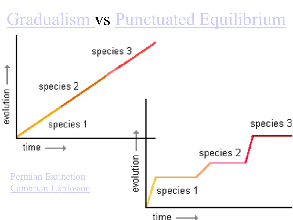 Gradualism Gradualism vs Punctuated EquilibriumPunctuated Equilibrium Permian Extinction Cambrian Explosion