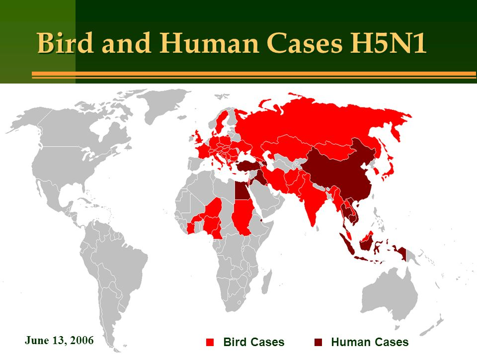 Bird and Human Cases H5N1 Bird CasesHuman Cases June 13, 2006