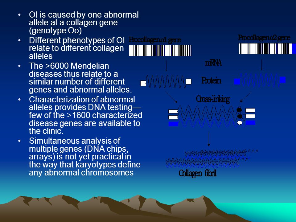 OI is caused by one abnormal allele at a collagen gene (genotype Oo) Different phenotypes of OI relate to different collagen alleles The >6000 Mendeli