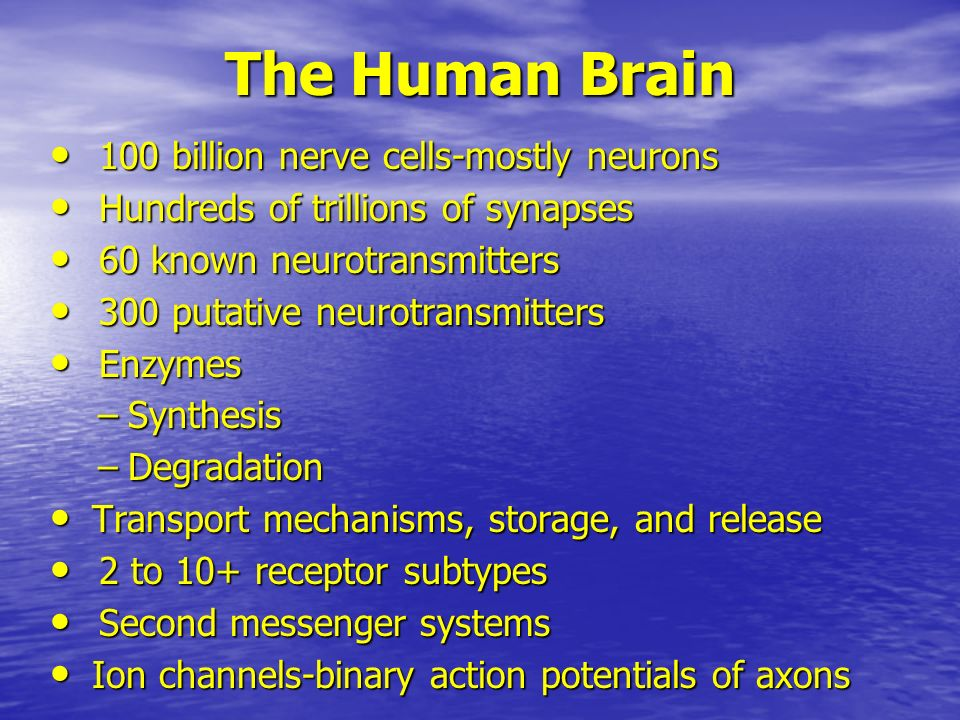 The Human Brain 100 billion nerve cells-mostly neurons 100 billion nerve cells-mostly neurons Hundreds of trillions of synapses Hundreds of trillions of synapses 60 known neurotransmitters 60 known neurotransmitters 300 putative neurotransmitters 300 putative neurotransmitters Enzymes Enzymes –Synthesis –Degradation Transport mechanisms, storage, and release Transport mechanisms, storage, and release 2 to 10+ receptor subtypes 2 to 10+ receptor subtypes Second messenger systems Second messenger systems Ion channels-binary action potentials of axons Ion channels-binary action potentials of axons