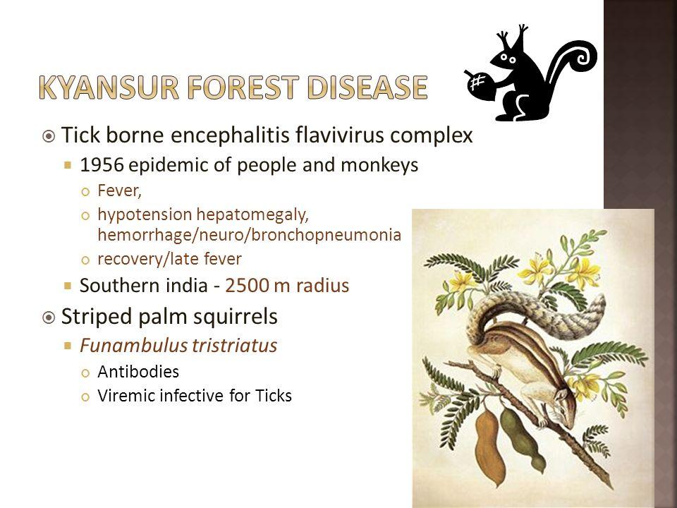 Tick borne encephalitis flavivirus complex 1956 epidemic of people and monkeys Fever, hypotension hepatomegaly, hemorrhage/neuro/bronchopneumonia reco
