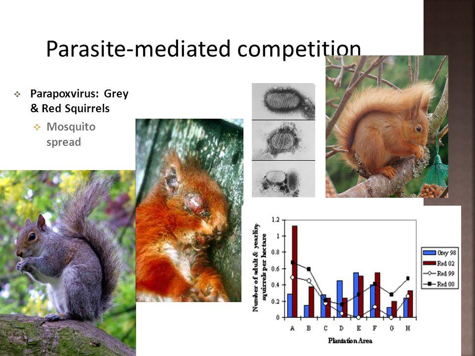 Parapoxvirus: Grey & Red Squirrels Mosquito spread
