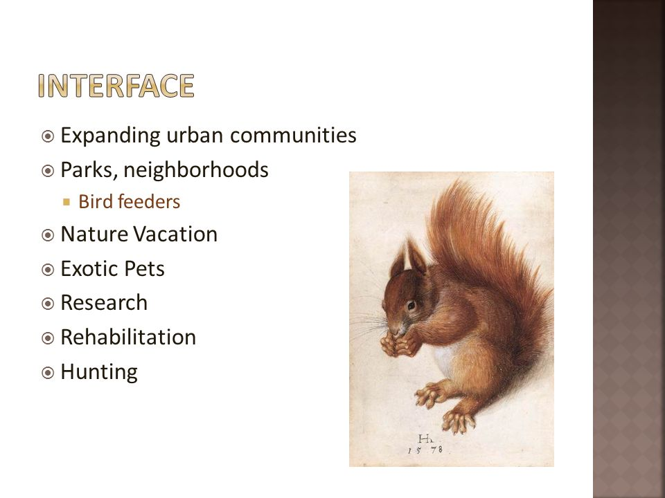 Expanding urban communities Parks, neighborhoods Bird feeders Nature Vacation Exotic Pets Research Rehabilitation Hunting