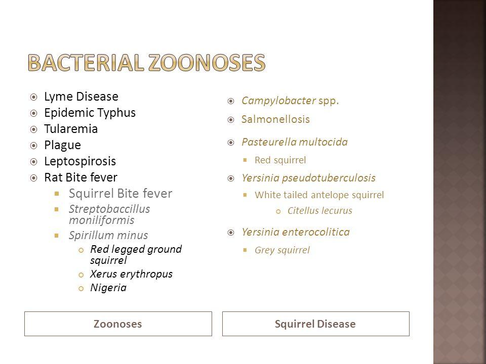 ZoonosesSquirrel Disease Lyme Disease Epidemic Typhus Tularemia Plague Leptospirosis Rat Bite fever Squirrel Bite fever Streptobaccillus moniliformis