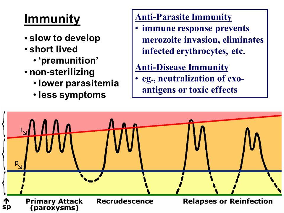Immunity slow to develop short lived premunition non-sterilizing lower parasitemia less symptoms Anti-Parasite Immunity immune response prevents meroz