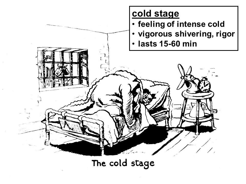 cold stage feeling of intense cold vigorous shivering, rigor lasts 15-60 min