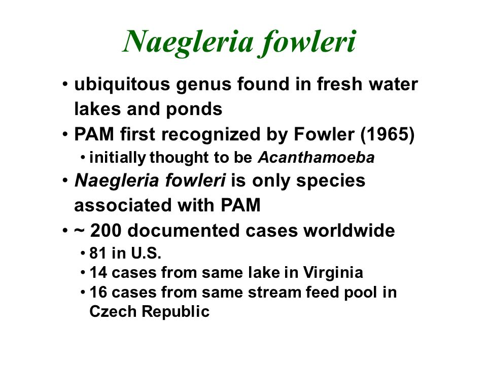 Naegleria fowleri ubiquitous genus found in fresh water lakes and ponds PAM first recognized by Fowler (1965) initially thought to be Acanthamoeba Naegleria fowleri is only species associated with PAM ~ 200 documented cases worldwide 81 in U.S.