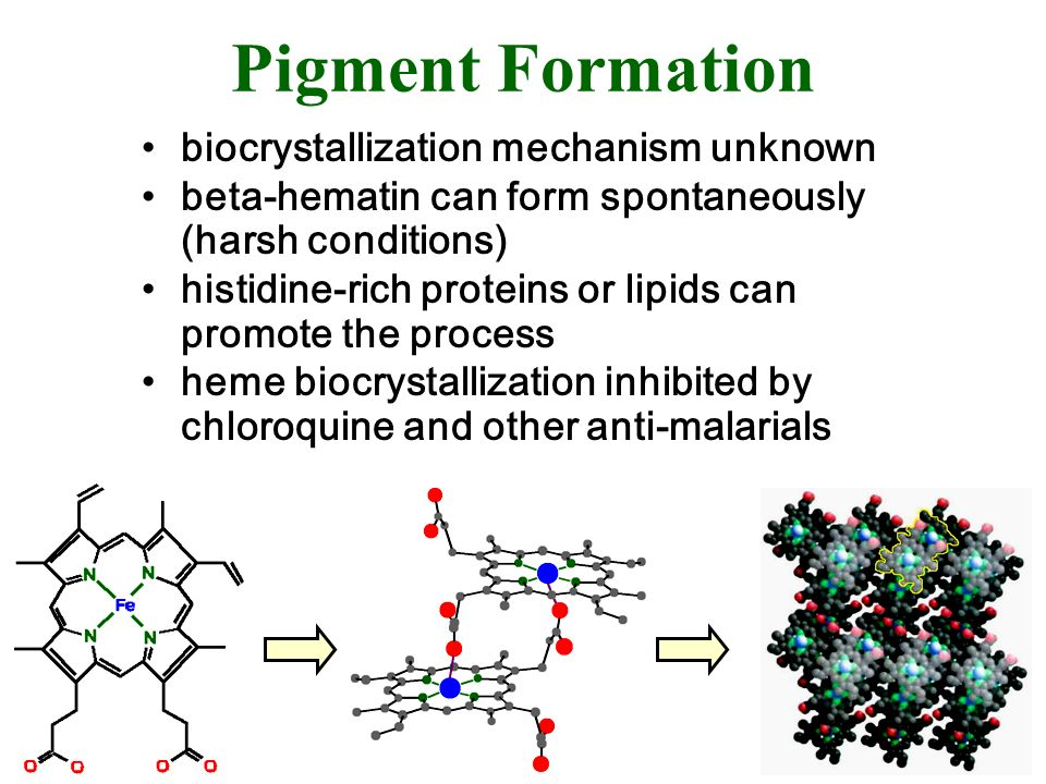Pigment Formation biocrystallization mechanism unknown beta-hematin can form spontaneously (harsh conditions) histidine-rich proteins or lipids can pr