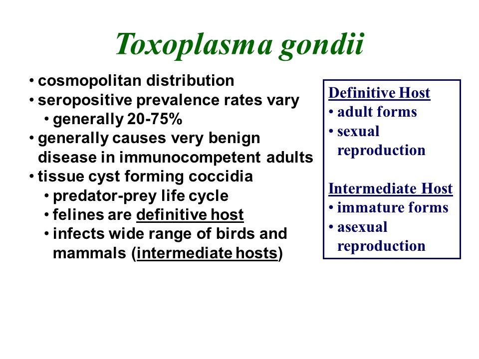 Toxoplasma gondii cosmopolitan distribution seropositive prevalence rates vary generally 20-75% generally causes very benign disease in immunocompeten