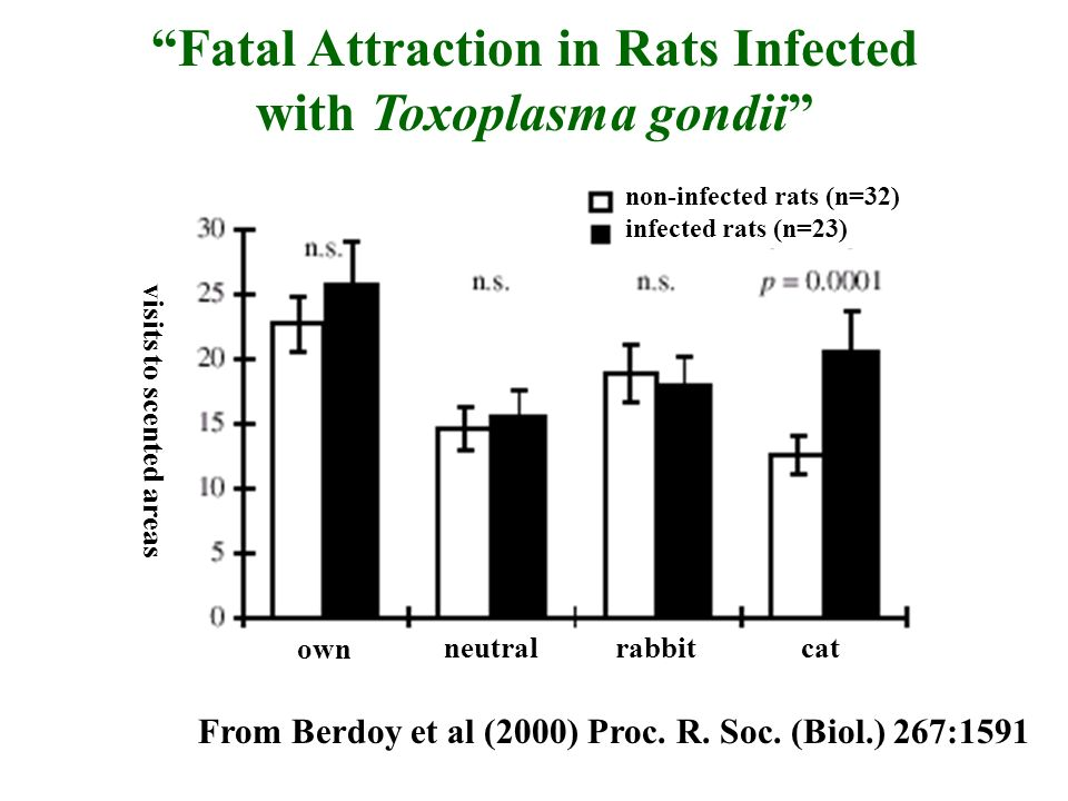 Fatal Attraction in Rats Infected with Toxoplasma gondii From Berdoy et al (2000) Proc. R. Soc. (Biol.) 267:1591 non-infected rats (n=32) infected rat