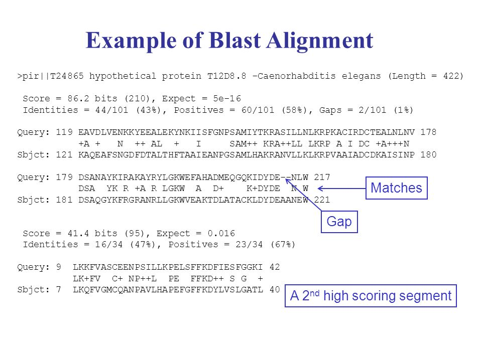 Example of Blast Alignment >pir||T24865 hypothetical protein T12D8.8 -Caenorhabditis elegans (Length = 422) Score = 86.2 bits (210), Expect = 5e-16 Id