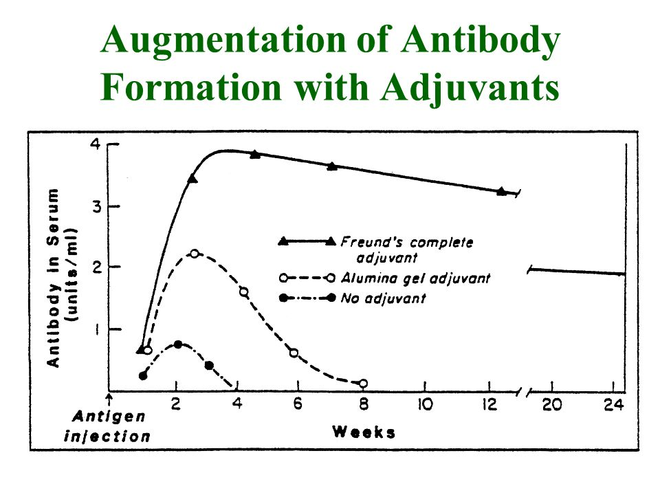 Augmentation of Antibody Formation with Adjuvants