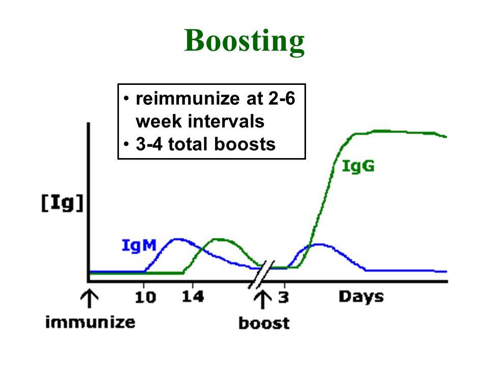 Boosting reimmunize at 2-6 week intervals 3-4 total boosts