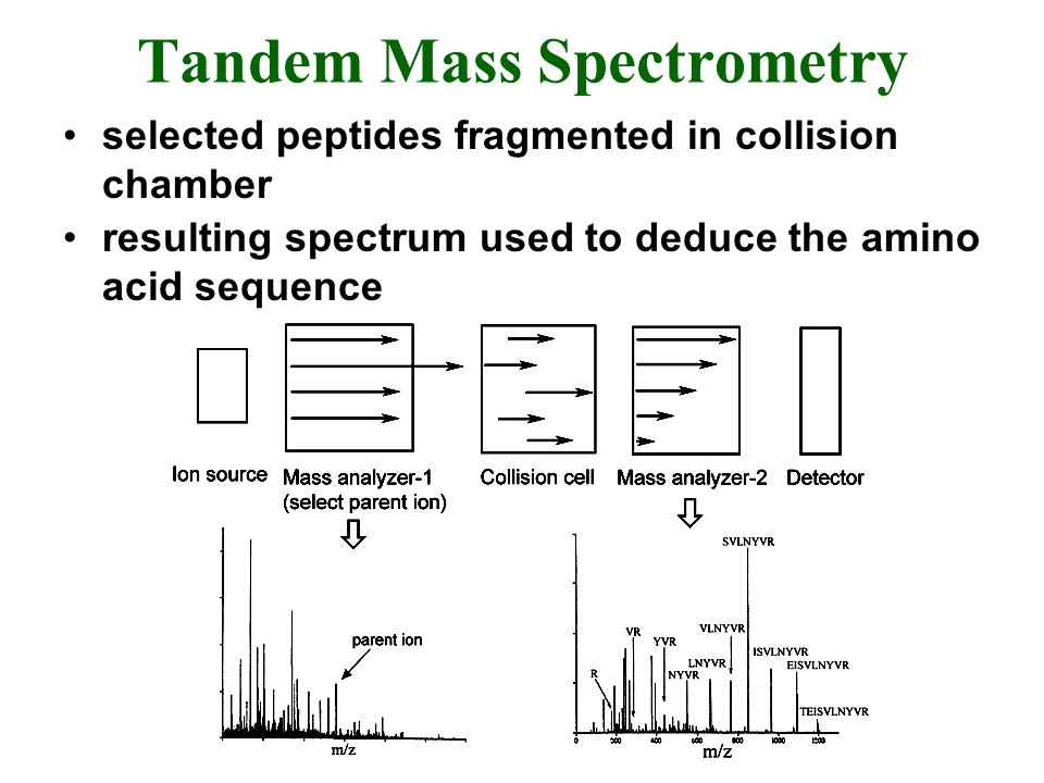 Tandem Mass Spectrometry selected peptides fragmented in collision chamber resulting spectrum used to deduce the amino acid sequence