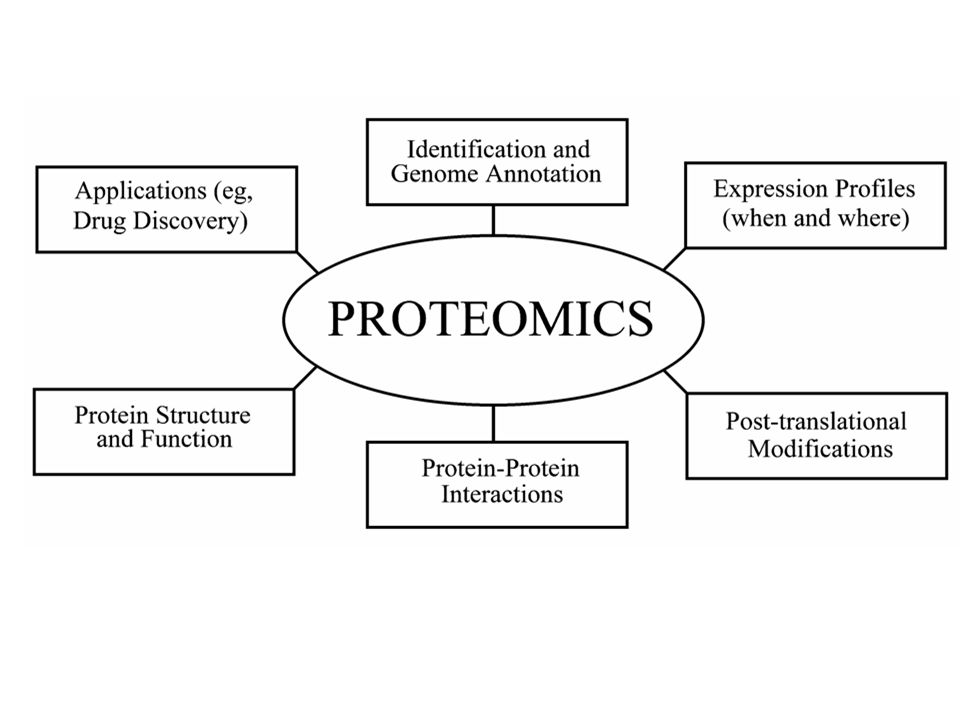 Genomics Proteomics identify total # of genes and functional annotations –accuracy of exon/intron structure predictions.
