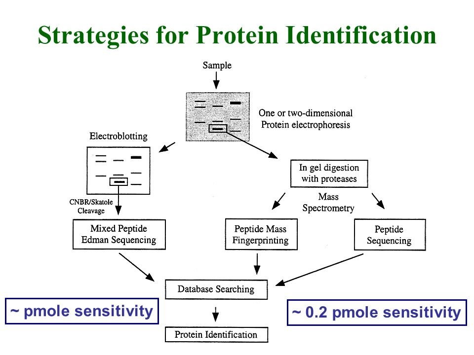 Strategies for Protein Identification ~ pmole sensitivity ~ 0.2 pmole sensitivity