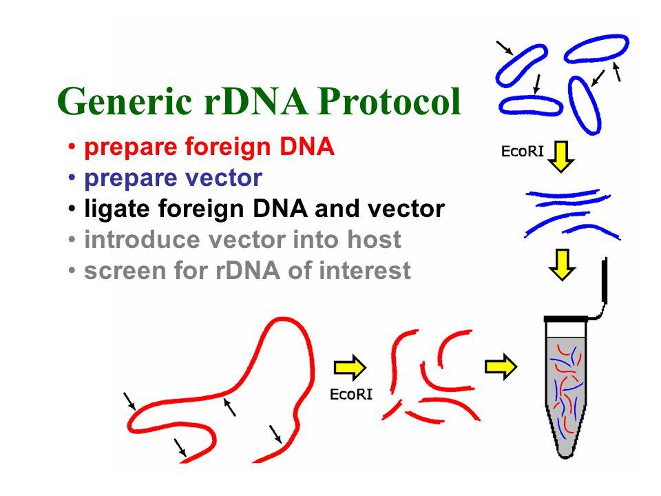 prepare foreign DNA prepare vector ligate foreign DNA and vector introduce vector into host screen for rDNA of interest Generic rDNA Protocol