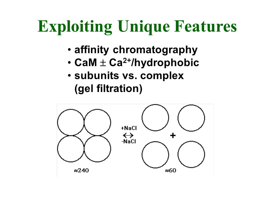 Exploiting Unique Features affinity chromatography CaM Ca 2+ /hydrophobic subunits vs. complex (gel filtration)