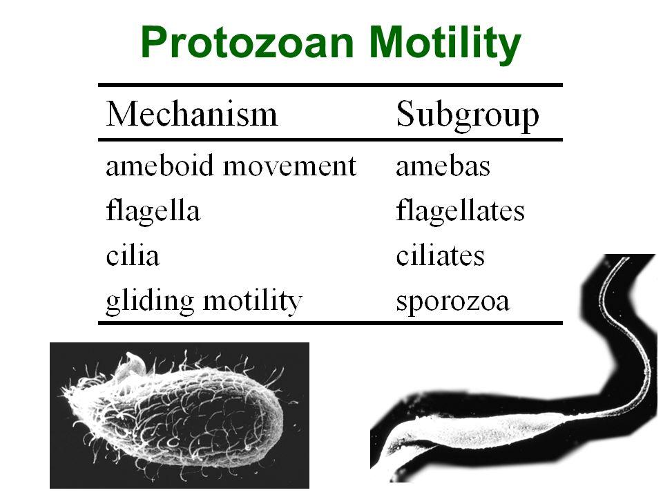 Protozoan Motility