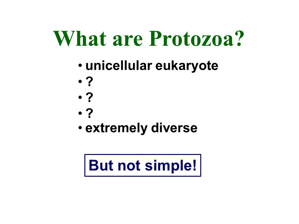 What are Protozoa? unicellular eukaryote ? extremely diverse But not simple!