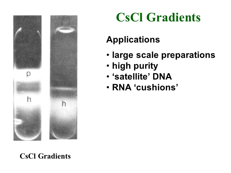 CsCl Gradients Applications large scale preparations high purity satellite DNA RNA cushions CsCl Gradients