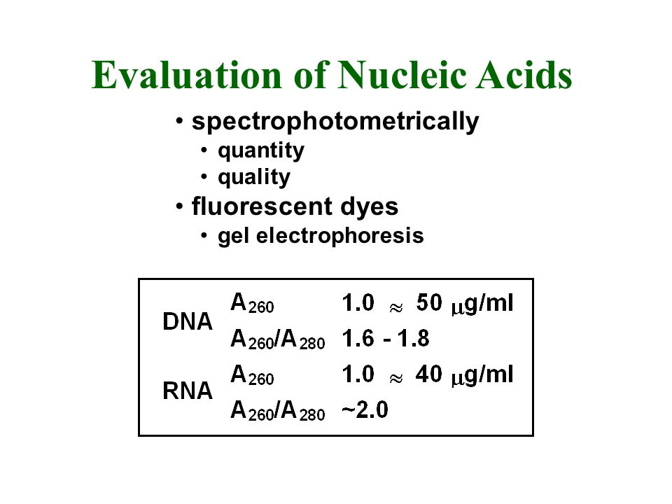 Evaluation of Nucleic Acids spectrophotometrically quantity quality fluorescent dyes gel electrophoresis