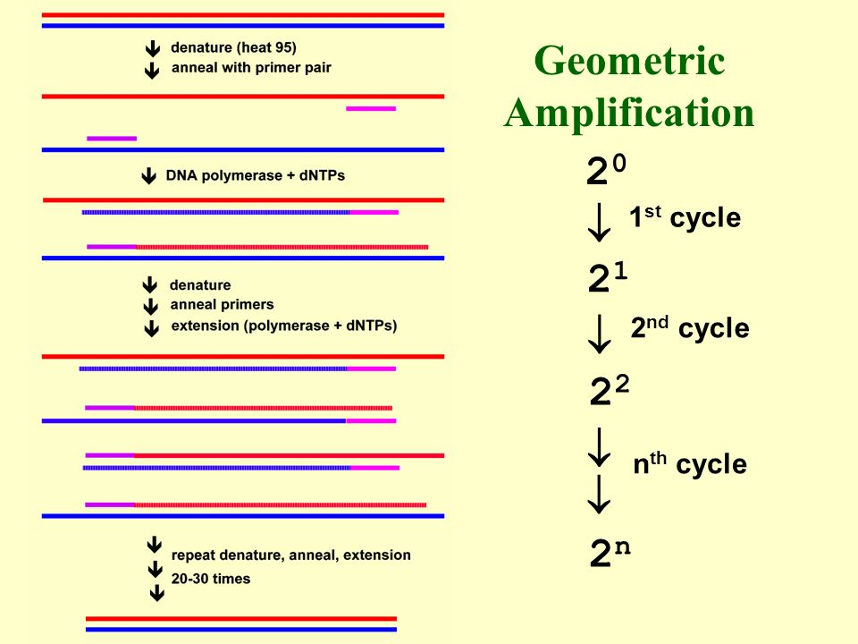 Geometric Amplification 2020 2121 2 2n2n 1 st cycle 2 nd cycle n th cycle