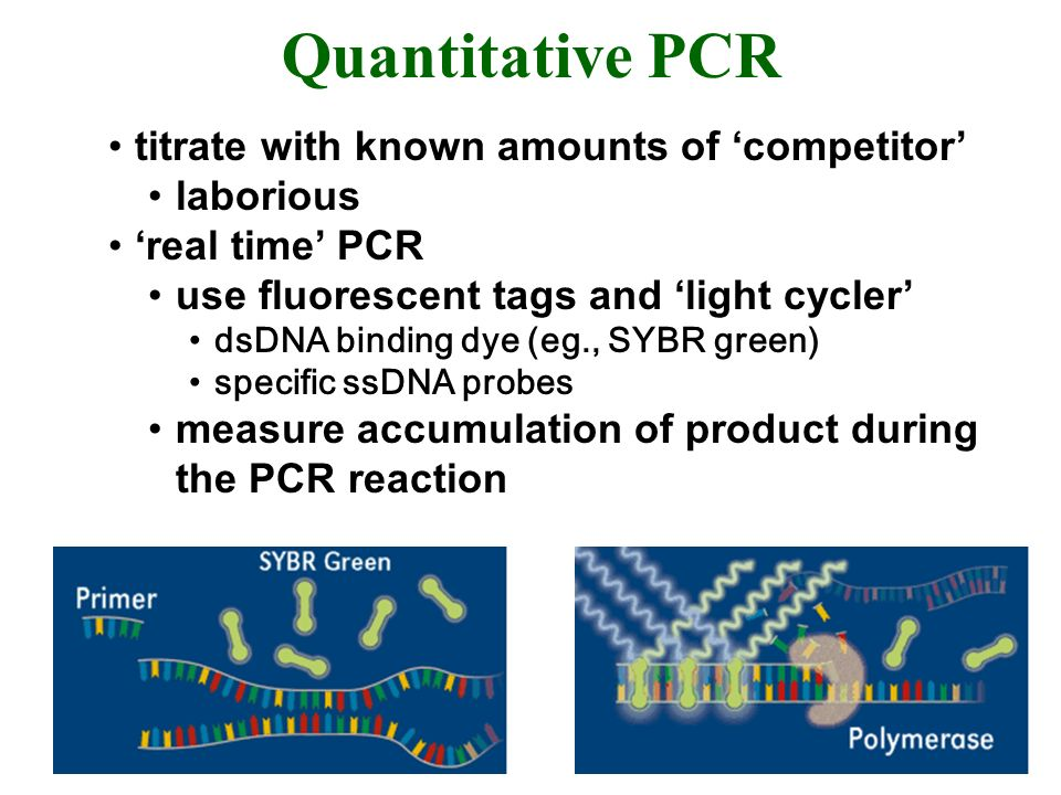 Quantitative PCR titrate with known amounts of competitor laborious real time PCR use fluorescent tags and light cycler dsDNA binding dye (eg., SYBR green) specific ssDNA probes measure accumulation of product during the PCR reaction