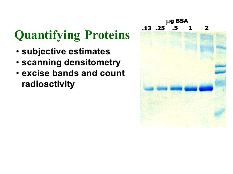 Quantifying Proteins subjective estimates scanning densitometry excise bands and count radioactivity