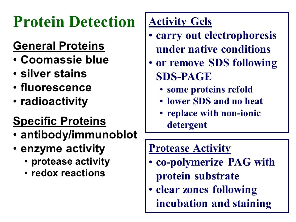 Protein Detection General Proteins Coomassie blue silver stains fluorescence radioactivity Specific Proteins antibody/immunoblot enzyme activity prote