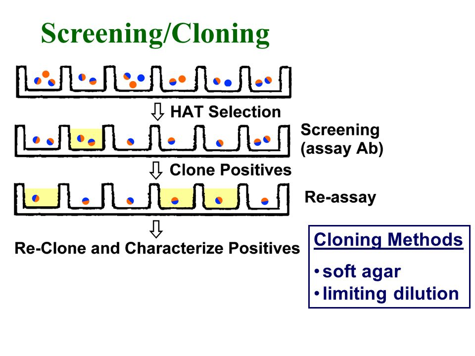 Cloning Methods soft agar limiting dilution Screening/Cloning