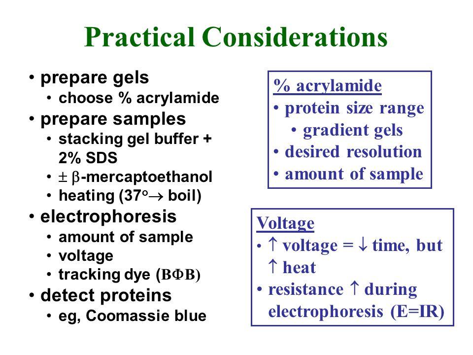 Practical Considerations prepare gels choose % acrylamide prepare samples stacking gel buffer + 2% SDS -mercaptoethanol heating (37 o boil) electropho