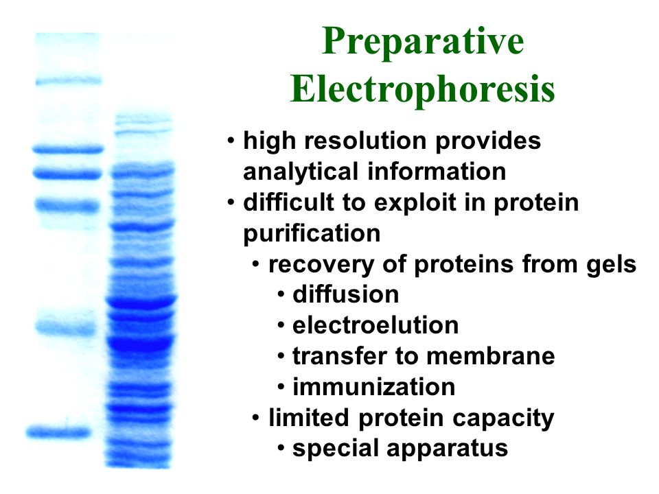 Preparative Electrophoresis high resolution provides analytical information difficult to exploit in protein purification recovery of proteins from gel