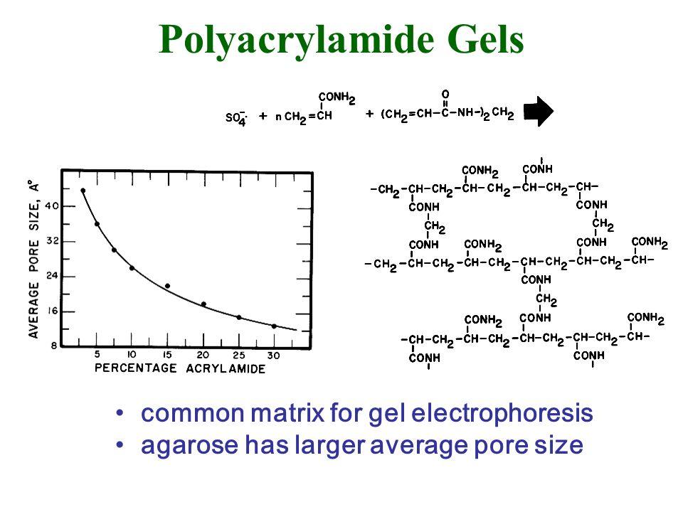 Polyacrylamide Gels common matrix for gel electrophoresis agarose has larger average pore size