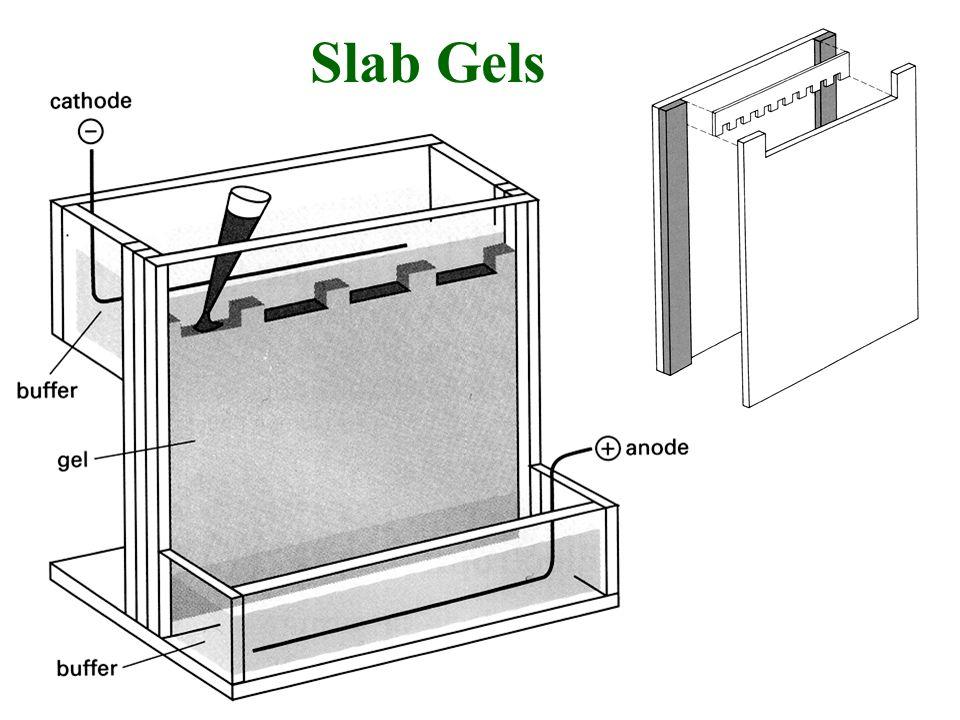 Slab Gels