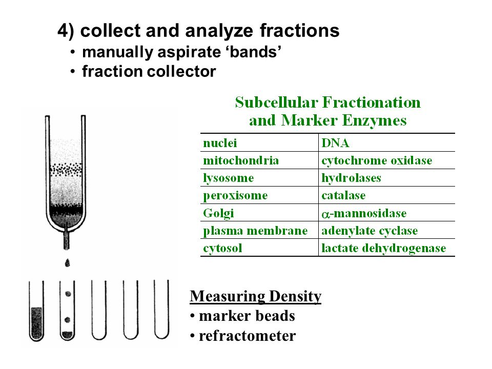 Measuring Density marker beads refractometer 4) collect and analyze fractions manually aspirate bands fraction collector