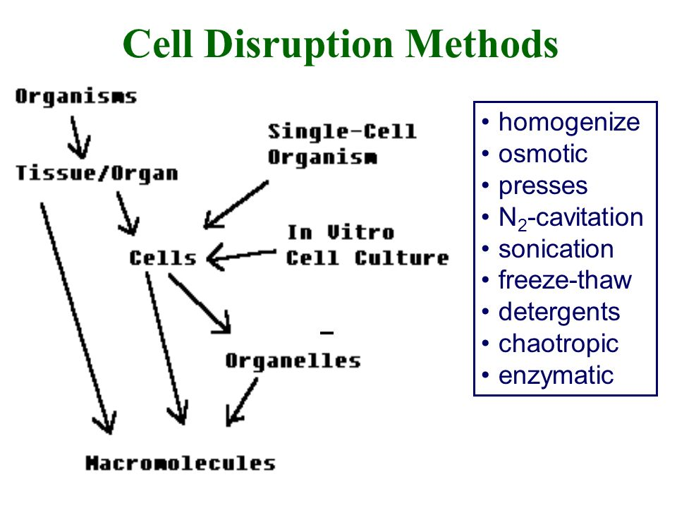 Cell Disruption Methods homogenize osmotic presses N 2 -cavitation sonication freeze-thaw detergents chaotropic enzymatic