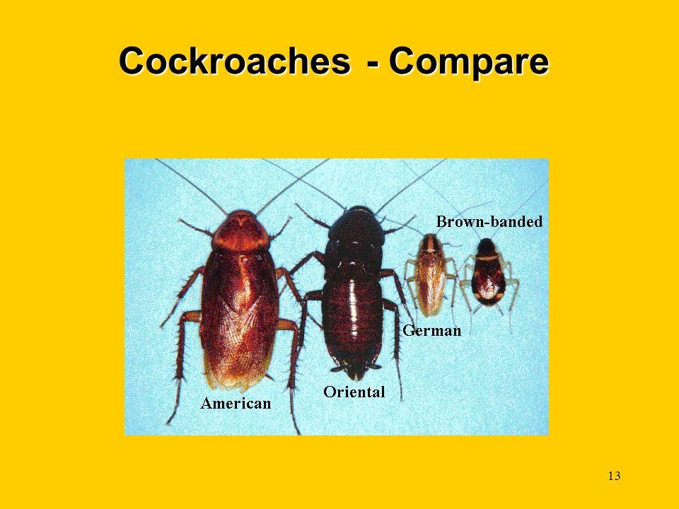 13 Cockroaches - Compare