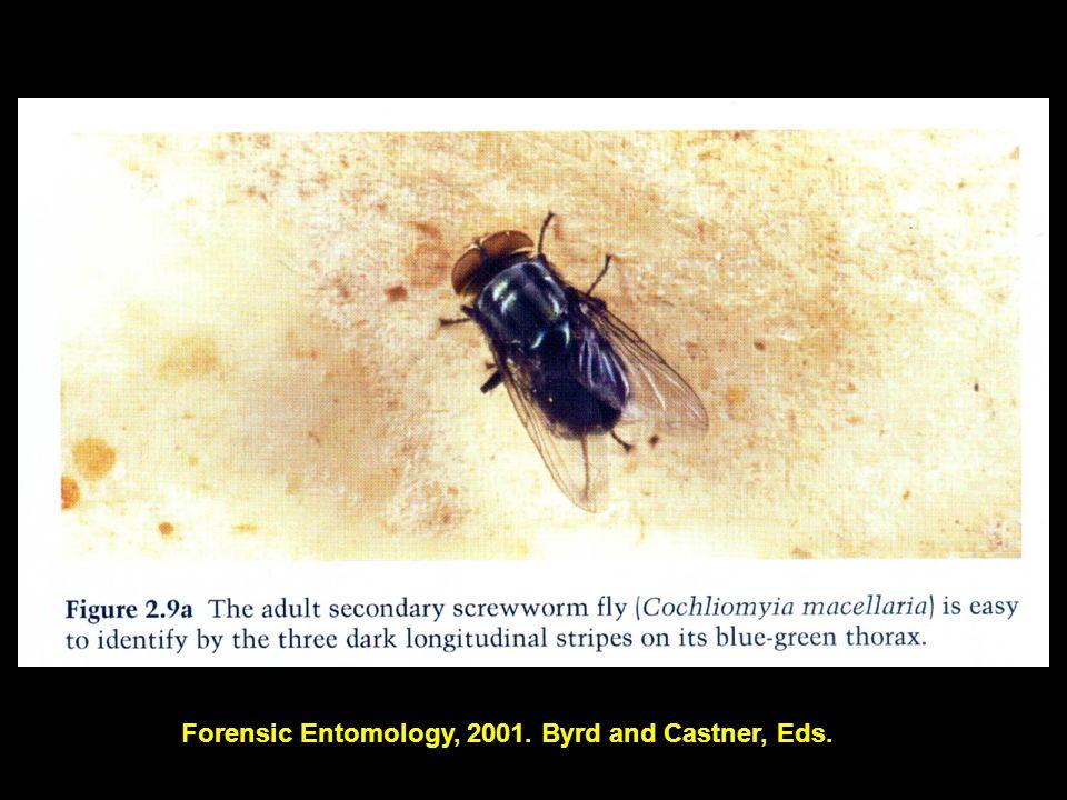 19 Forensic Entomology, 2001. Byrd and Castner, Eds.
